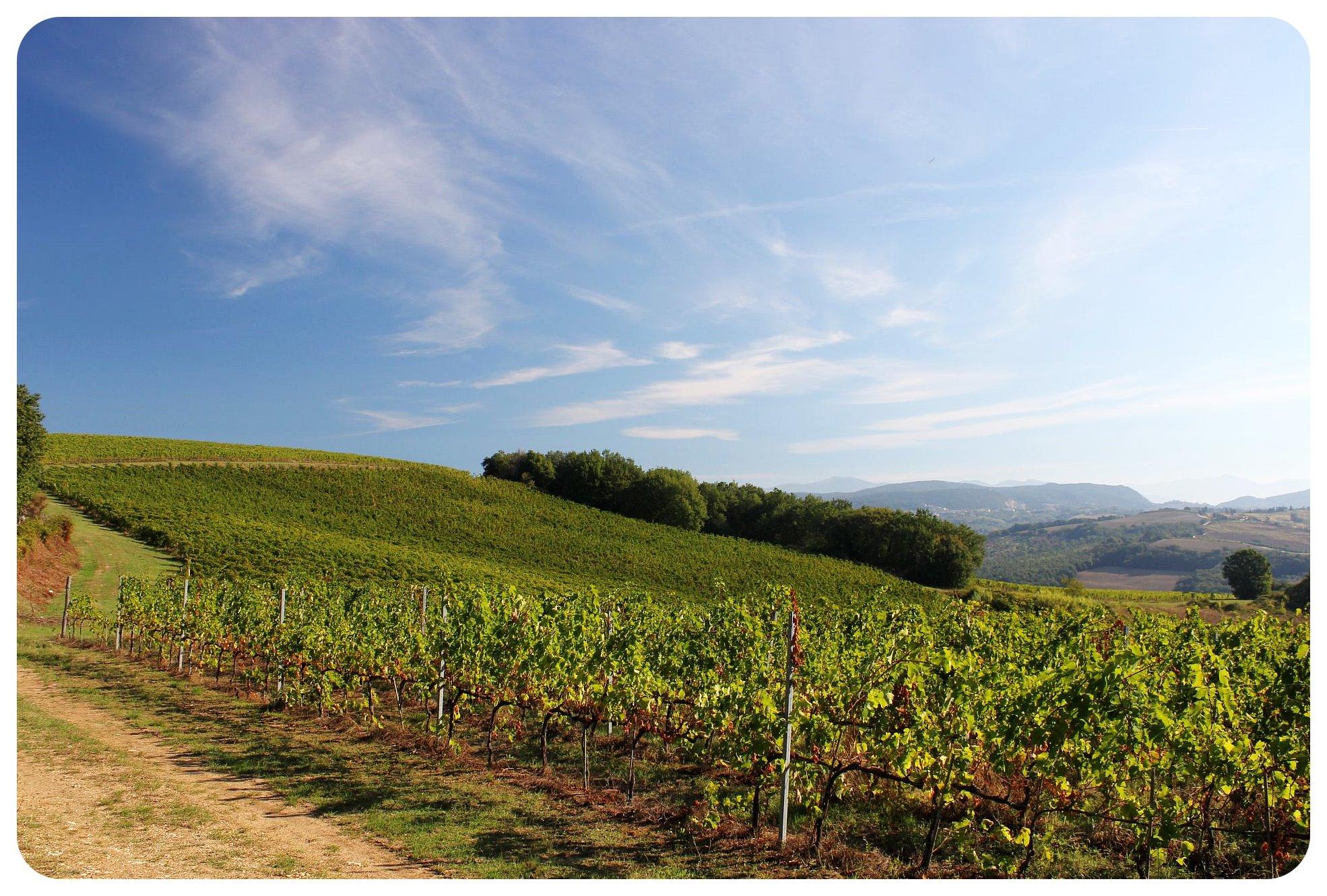 via amerina vineyard