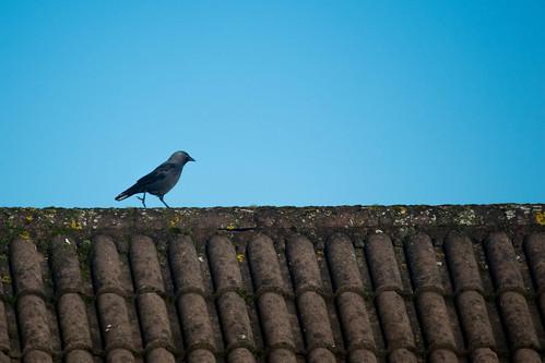 2017-01-29 Big Birdwatch