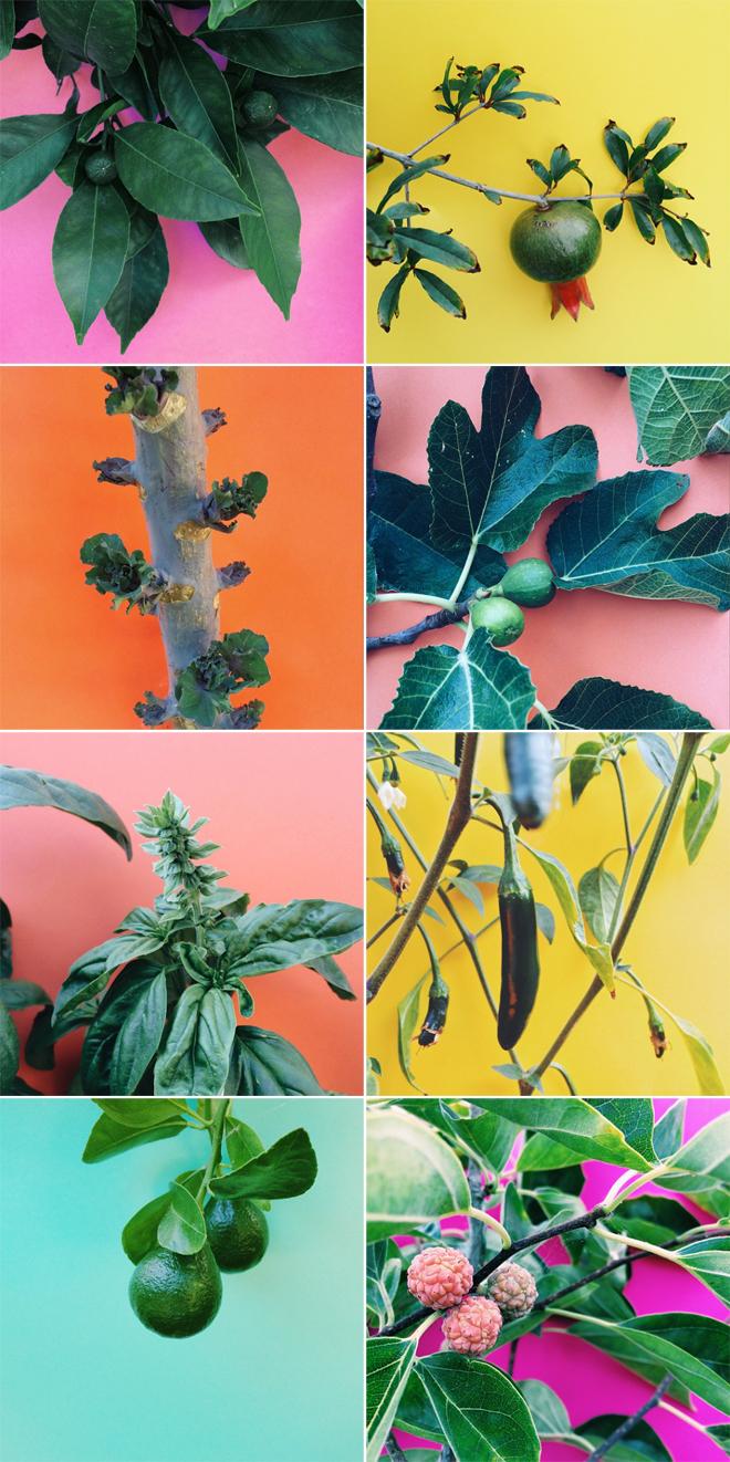 gardencolors