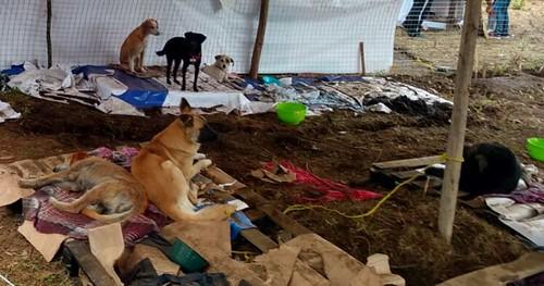 Hasta alimento para perros robaron de albergue de animales