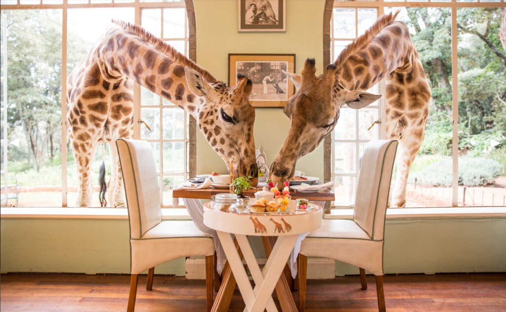 Giraffe-Manor