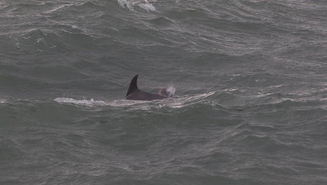 dolphins 412b