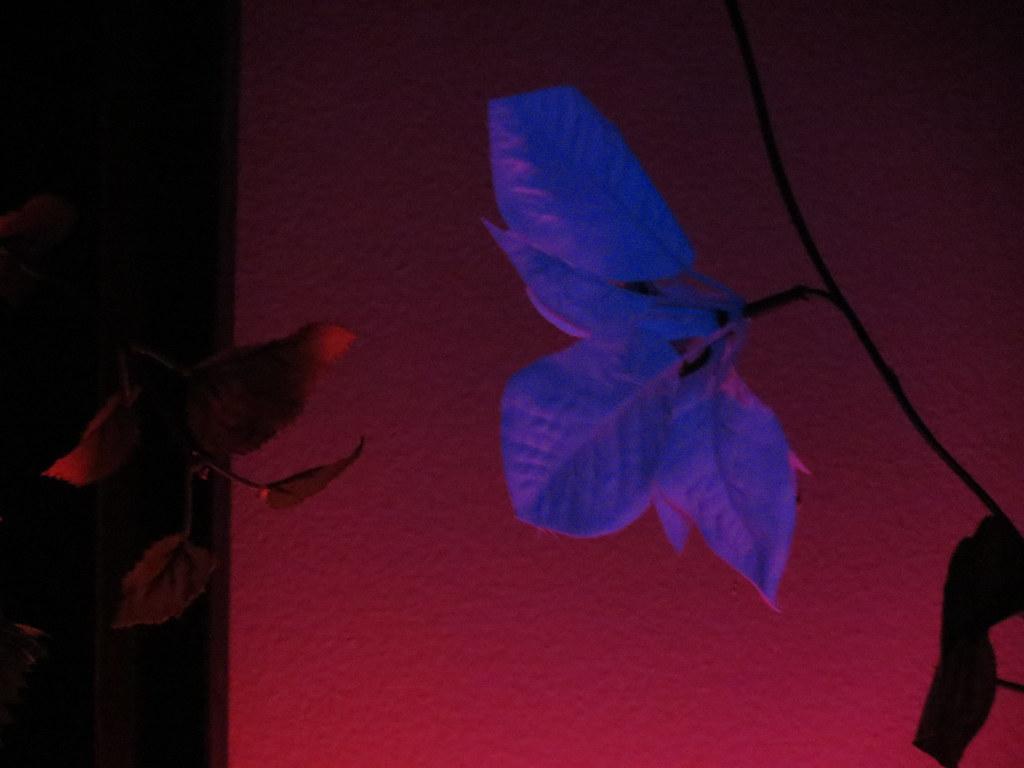Pink floyd wall flowers angela bosset flickr pink floyd wall flowers by little moonshine mightylinksfo