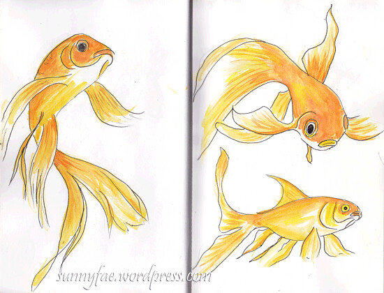 goldfish Sketch