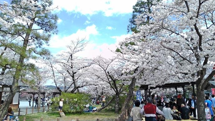 12 京都 嵐山渡月橋 賞櫻 櫻花 Saga Par 五色霜淇淋 彩色霜淇淋