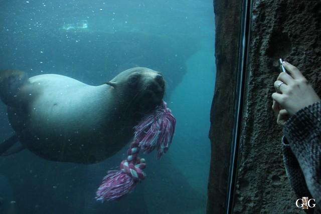 Besuch Zoo am Meer 29.12.201658