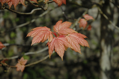 Leaves | by ShirleyGrant
