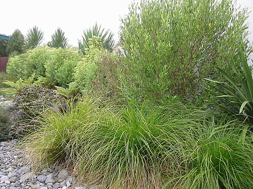 Native plantings new zealand plants nzlandscapes com ph for Native garden designs nz