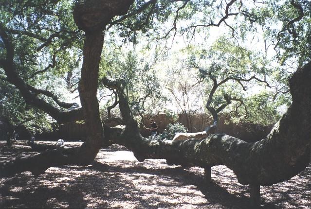 Angel Oak Dr Paewleys Island