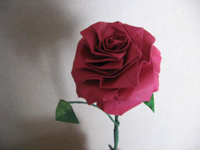 Langs rose 2 jorge jaramillo flickr langs rose 2 by georigami mightylinksfo