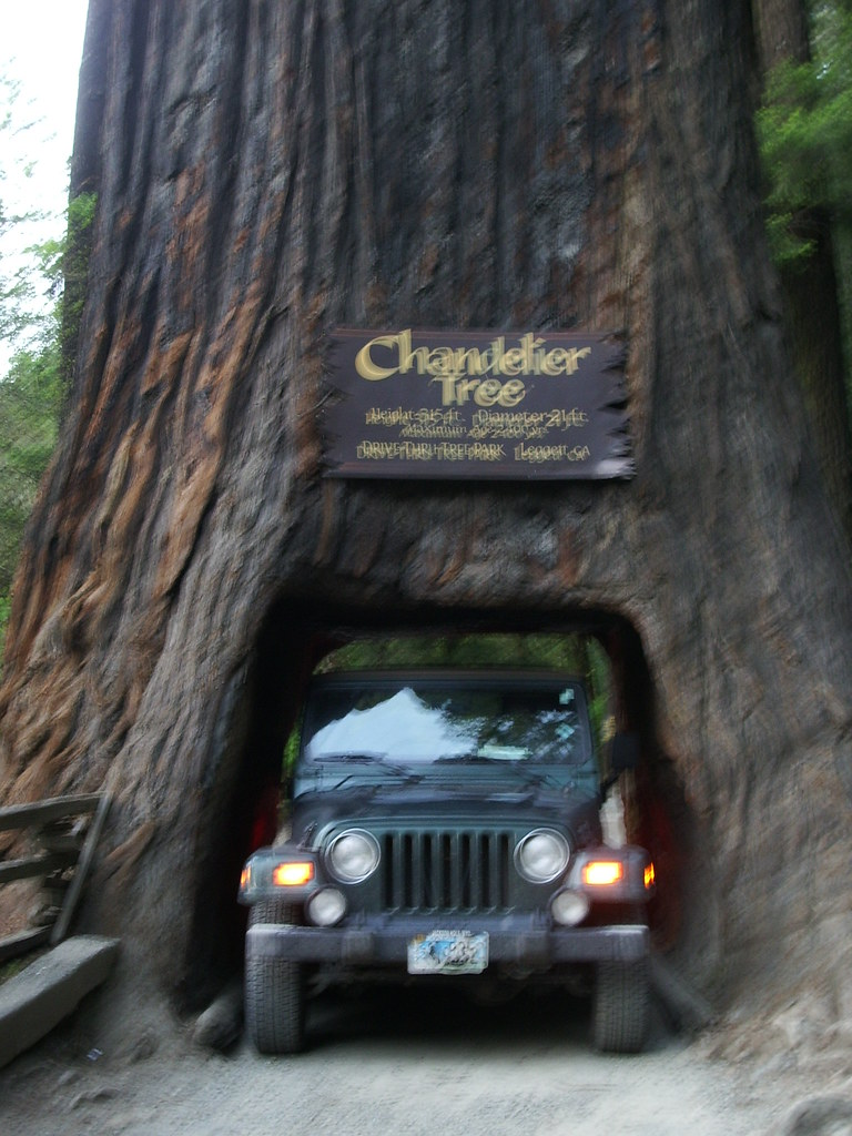 Chandelier tree jeep chandelier tree leggett ca flickr chandelier tree jeep by hillary h arubaitofo Images