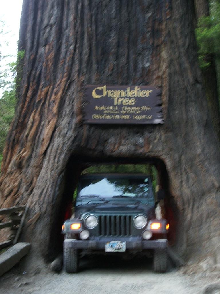 Chandelier tree jeep chandelier tree leggett ca flickr chandelier tree jeep by hillary h arubaitofo Choice Image