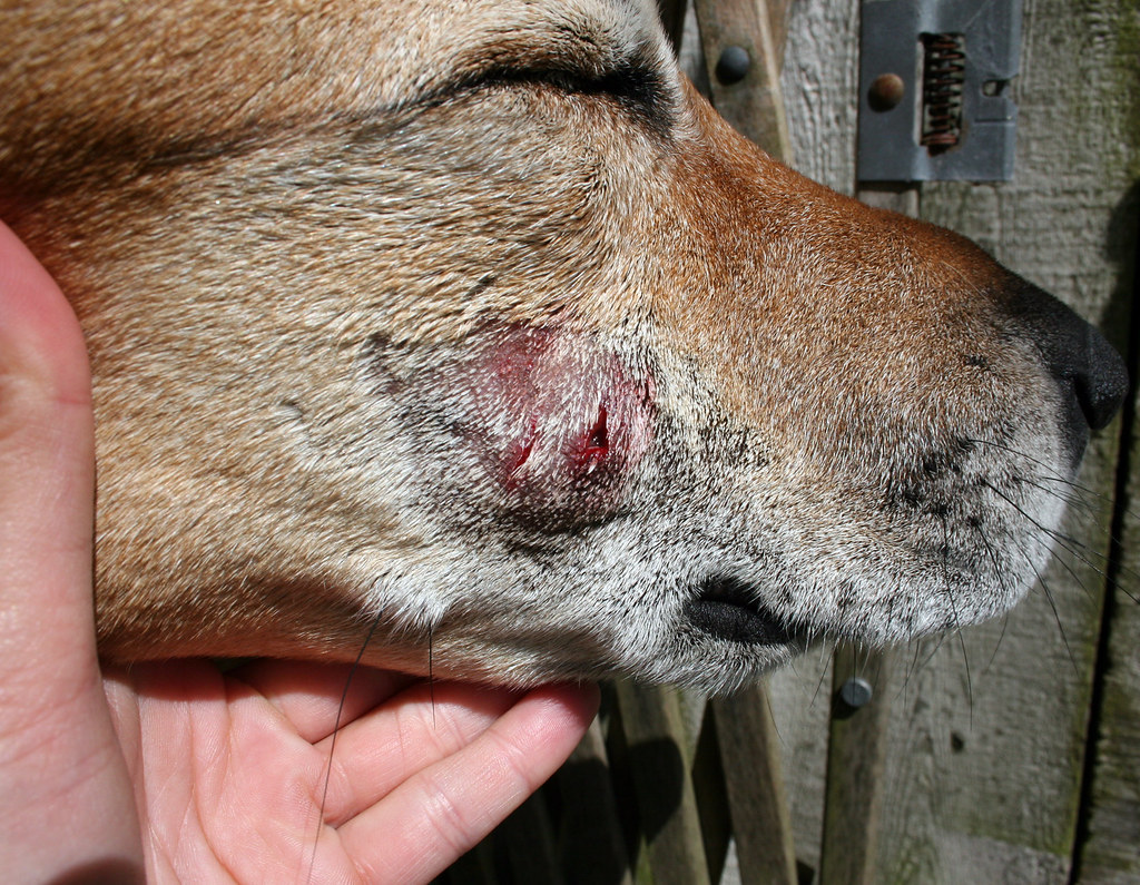 dogs bite A dog-bite statute many states have laws that make a dog owner legally liable for any injury or although commonly called dog-bite statutes, most of these laws cover all kinds of dog-inflicted.