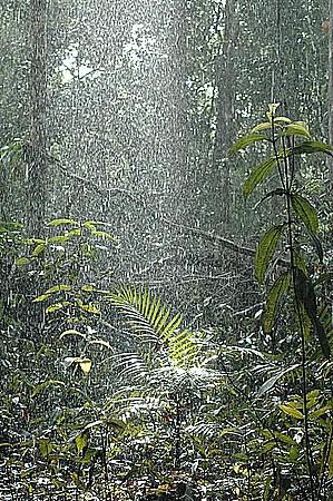 Rainforest weather, nr Nauta, Peru | Rich | Flickr