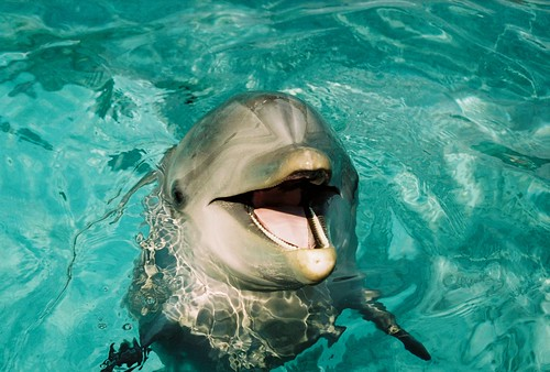 Happy Dolphin! | by princessangel