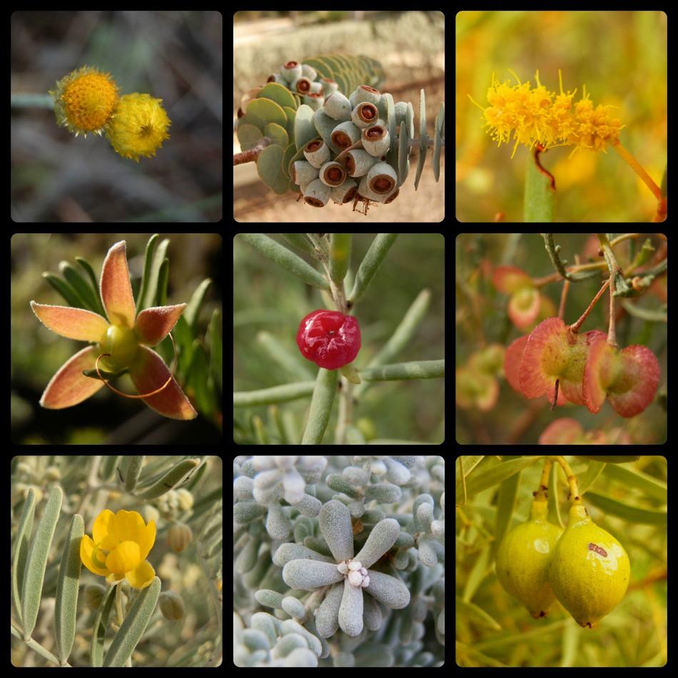 Arid Land Plants from Port Augusta Region