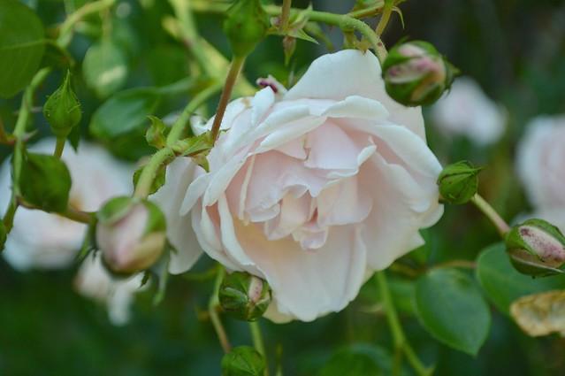 June Petals