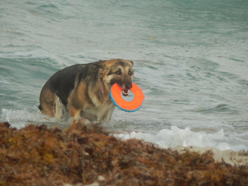 Dog Beach Hollywood Fl
