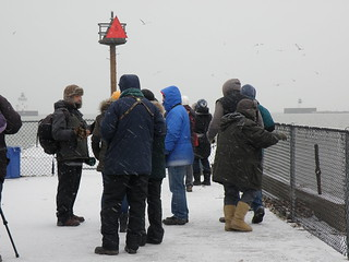 Icy Pier Birders by Penny O'Connor