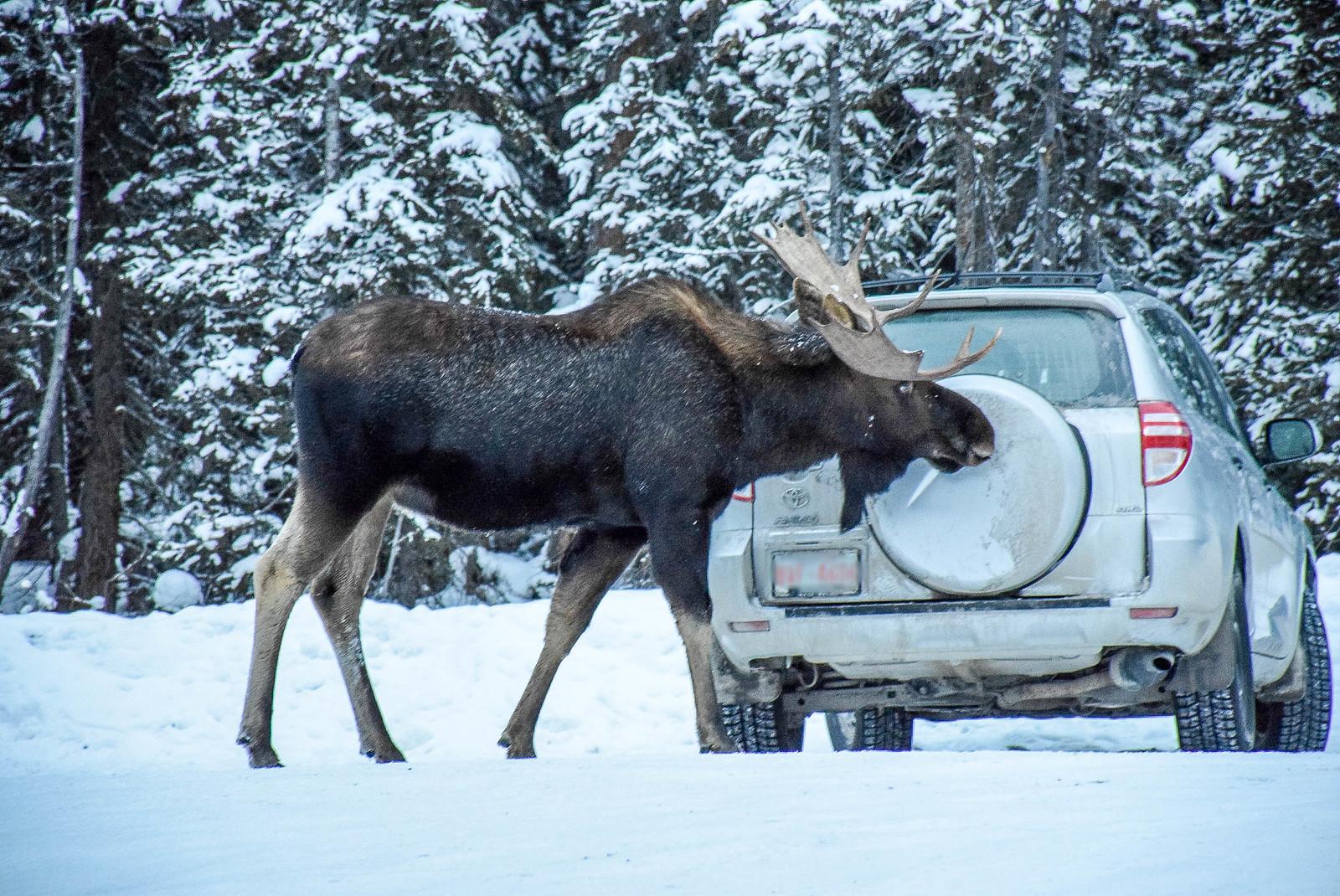 Mount Engadine Lodge, Alberta, Canada