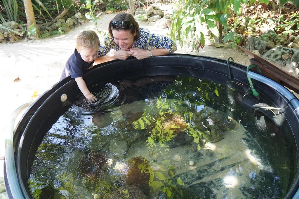 Andaman langkawi - coral nursery-018