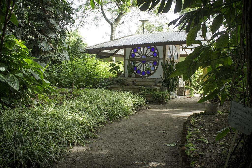 Jardin botanico usac guatemala arboles amanecer camino cas for Arboles jardin botanico