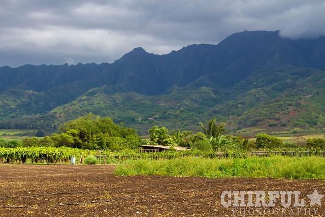 Waialua Farm