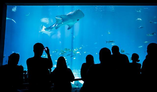 NSLC Medicine and Healthcare visits the Georgia Aquarium