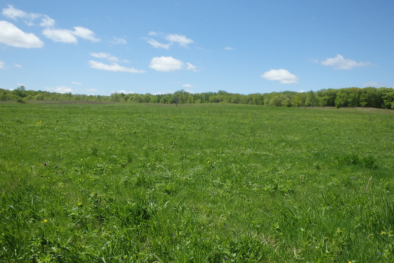 foreground all bright-green grass, green trees in the background, mostly sunny blue sky