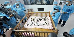 Panda Hospital