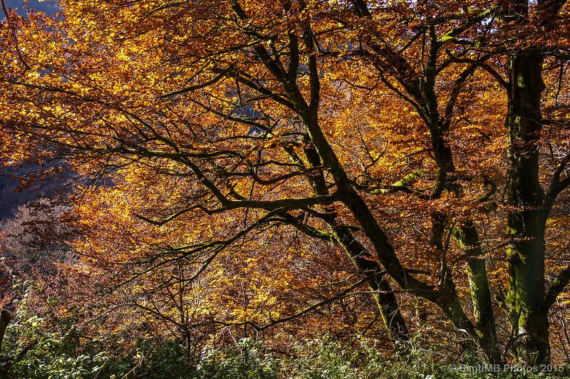 Colores de otoño por la regata de Itolatz