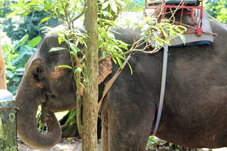 Ban Kwan Chang Elephant Camp trek