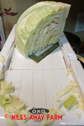 Cabbage Mandolin