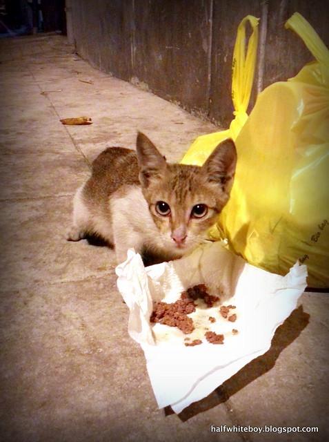 stray cats 03