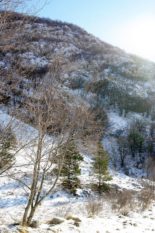 Деревья в долине
