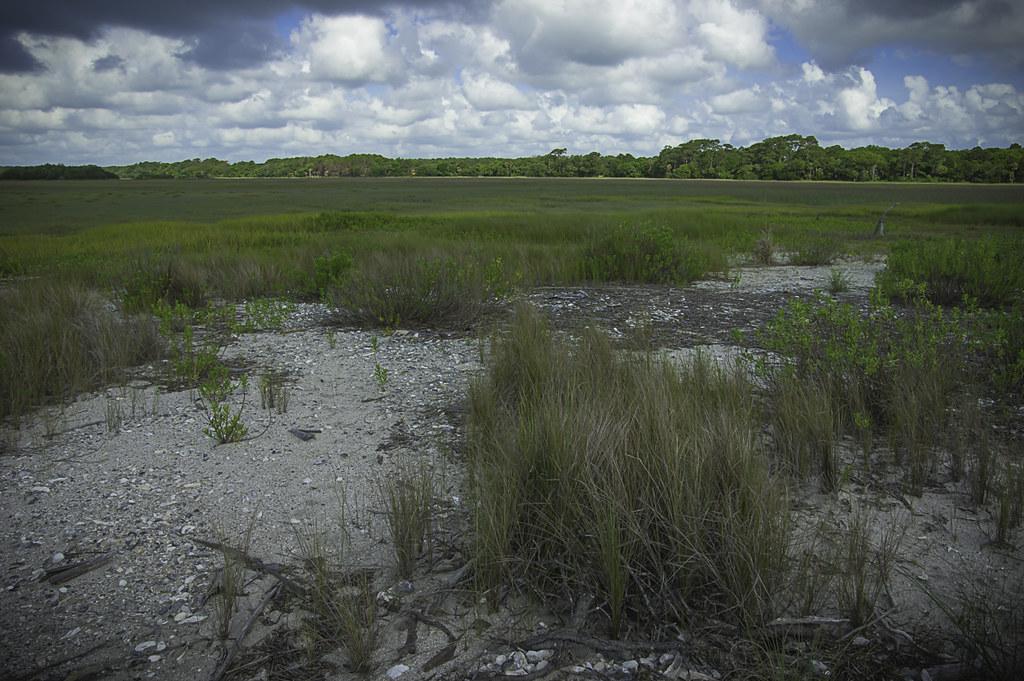 Salt marsh to horizon