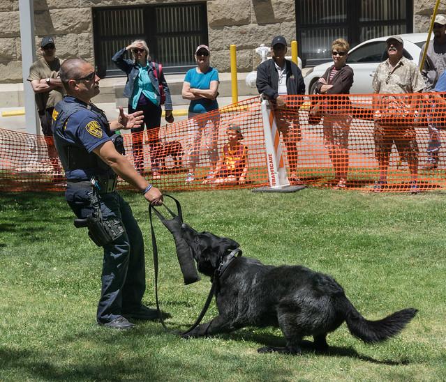 Police Dog Demonstration