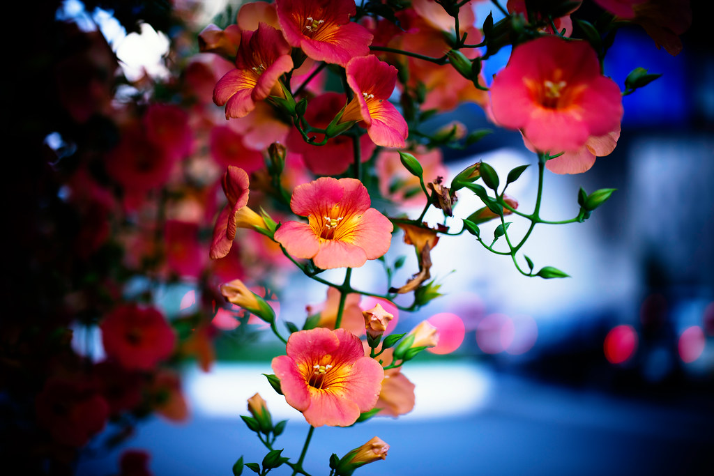 Evening Flowers | *Can...