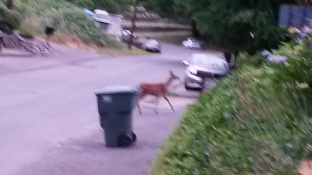 I saw a deer!