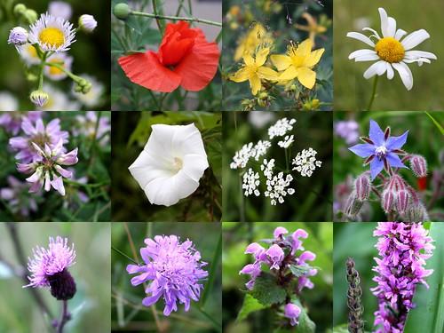 Summer evening flowers