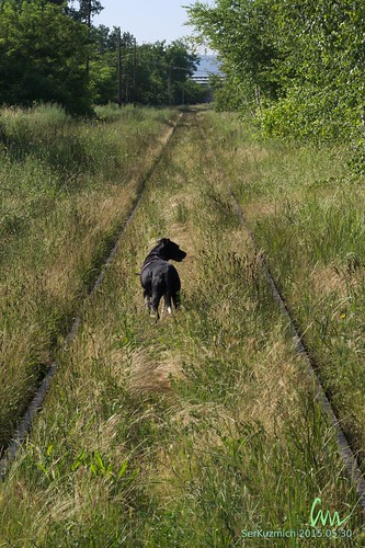 My Dog on Old Railway