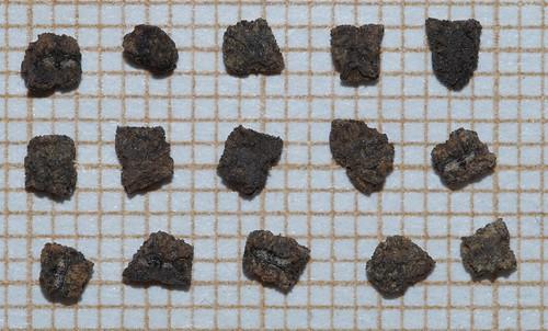 Tinantia erecta - tinantie dressée 31632671984_2b8481fae7