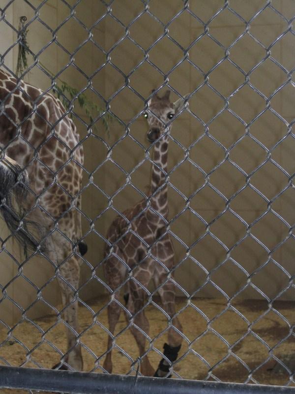 zoo (6)