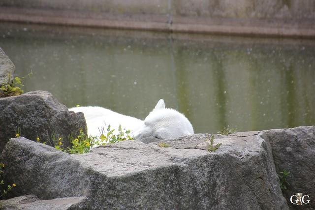 Besuch Zoo Berlin 31.05.201573