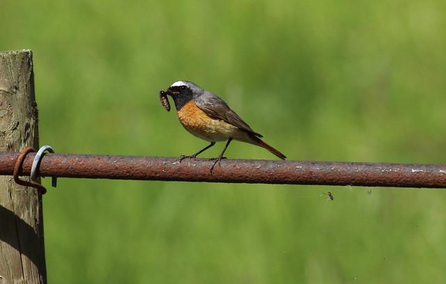 birdslakes33