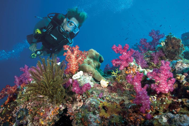 Plongee-dans-la-Barriere-de-Corail