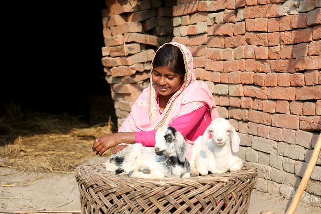 Caring for Baby Goats in Nepal