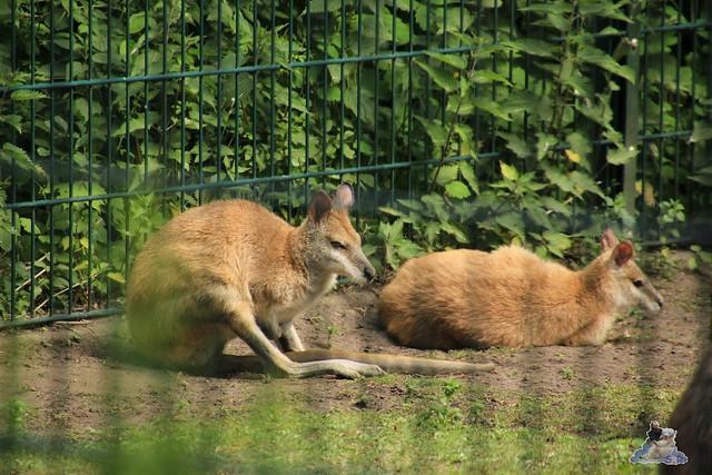 Tierpark Berlin 30.05.2015  150