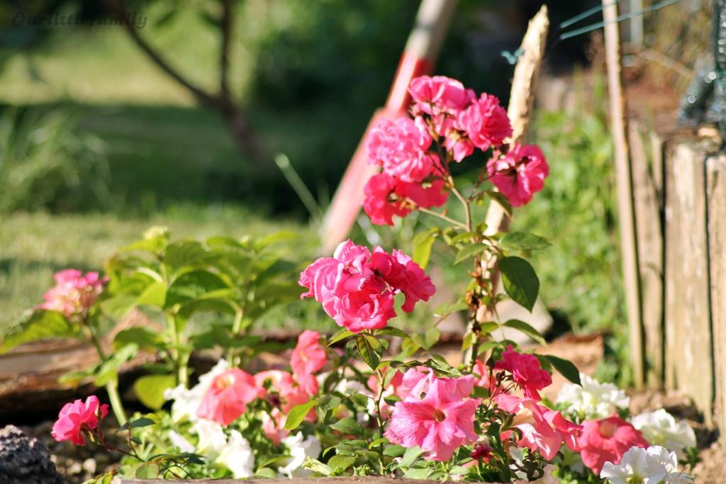 mon jardin 8