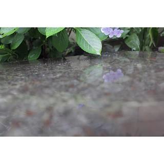 今日もやっぱり雨、なので嫁と一緒に周辺散策。ふらっと入ったお寺で緑に癒やされる。 月曜からまたえっちらおっちら行きましょう。